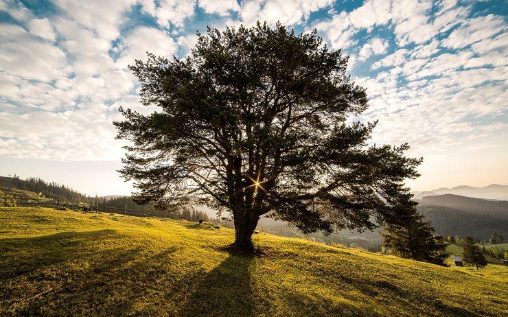 campulung-countryside-dawn-56875