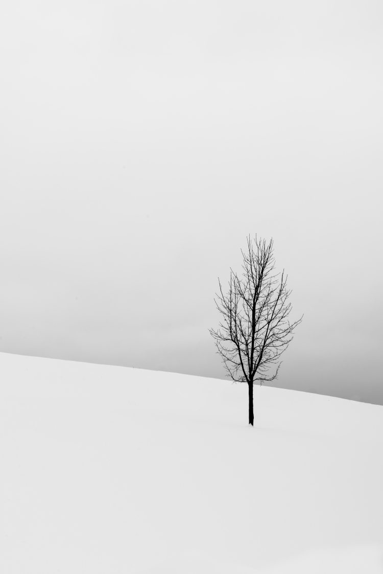 background-bare-tree-cold-1909331
