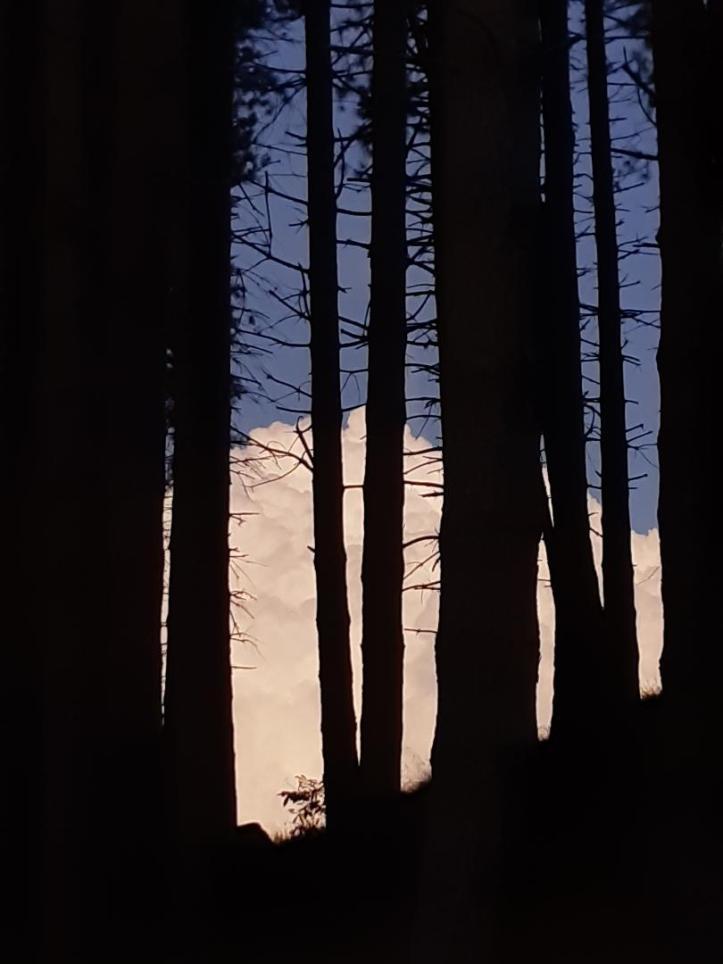 bosco madonna del monte 5 settembre 19